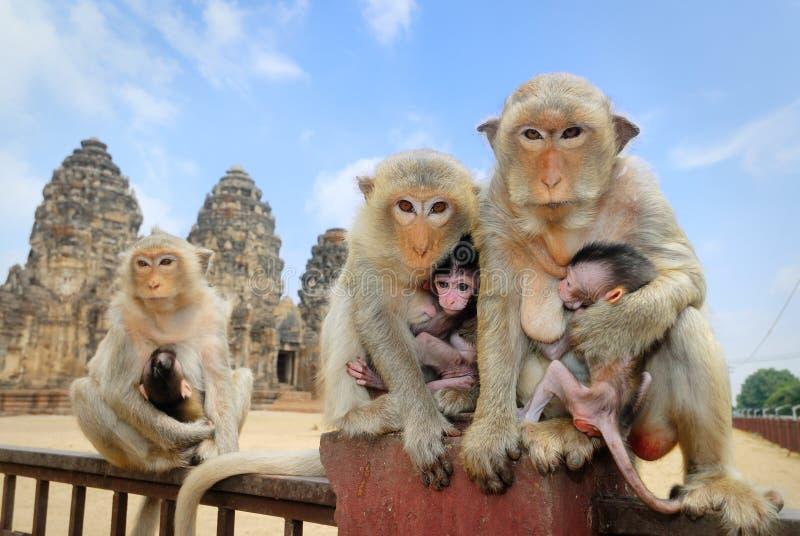 Małpia rodzina obraz royalty free