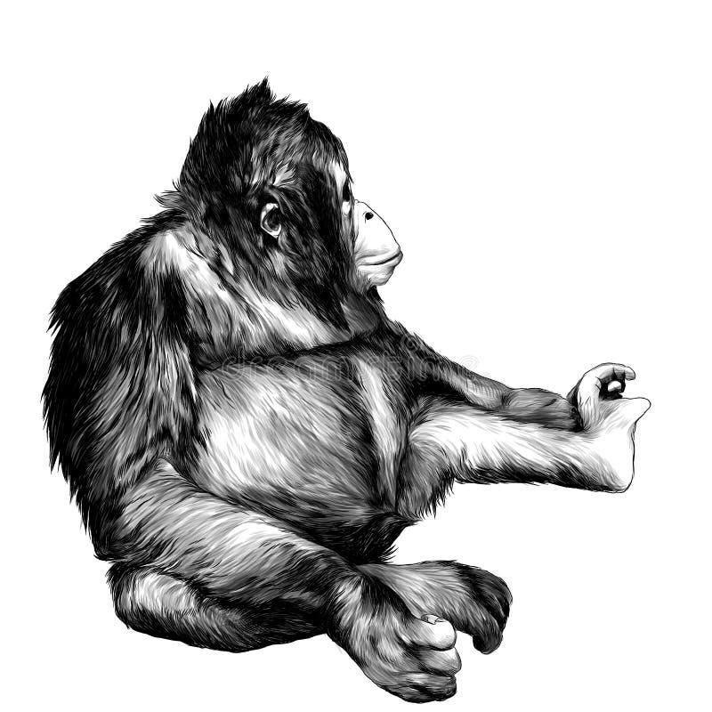 Małpia siedząca pełna długość i patrzeć daleko od royalty ilustracja