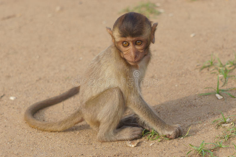 małpie dzieciątko obrazy stock