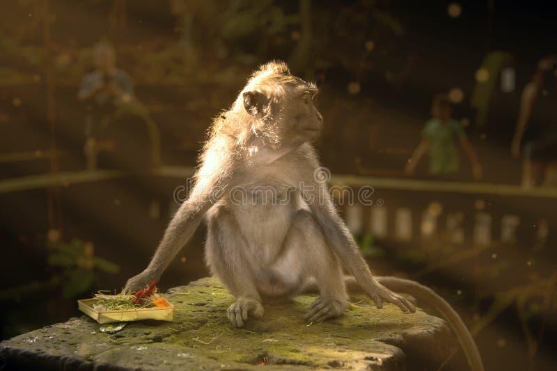 Małpie sztuki z prezentem bóg obrazy stock