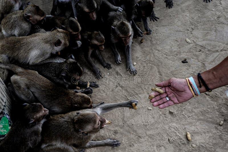 Małpy grupują brać obraz royalty free