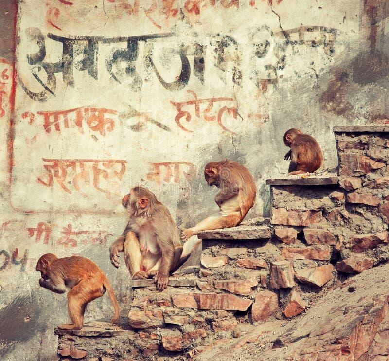 Małpy na ulicie obrazy royalty free