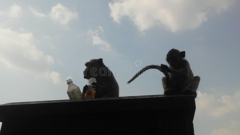 Małpy na ulicie w Lopburi, Tajlandia fotografia stock