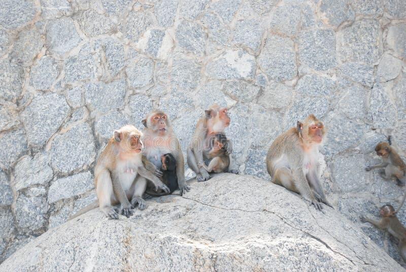Małpy siedzi wpólnie na skale obrazy stock