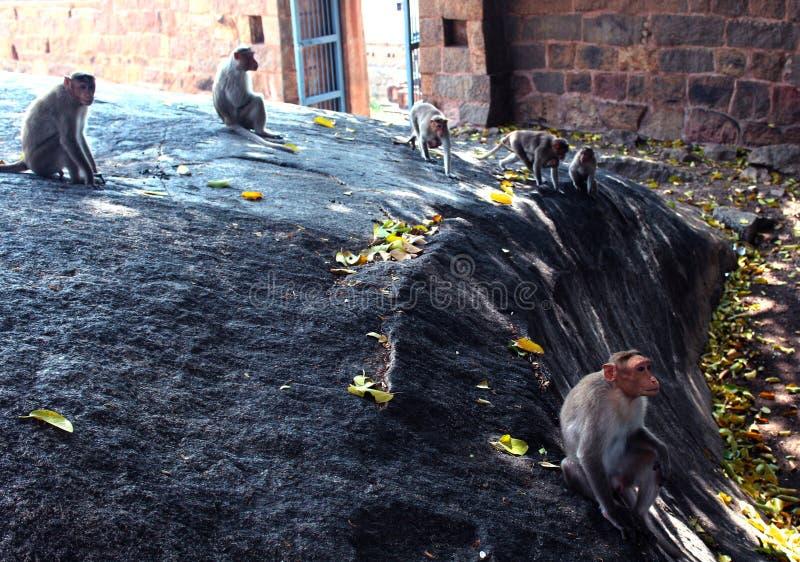 Małpy w forcie tirumayam obrazy royalty free