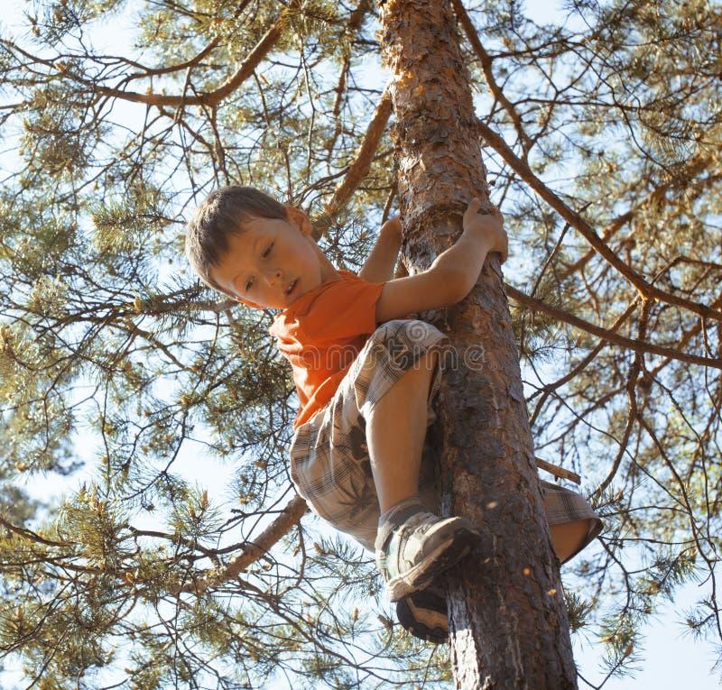 Mały śliczny chłopiec pięcie na drzewie fotografia stock