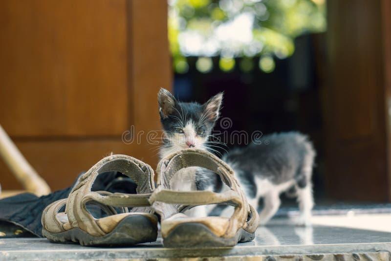 Mały śliczny czarny i biały figlarki obsiadanie w sandale i spada uśpiony fotografia royalty free