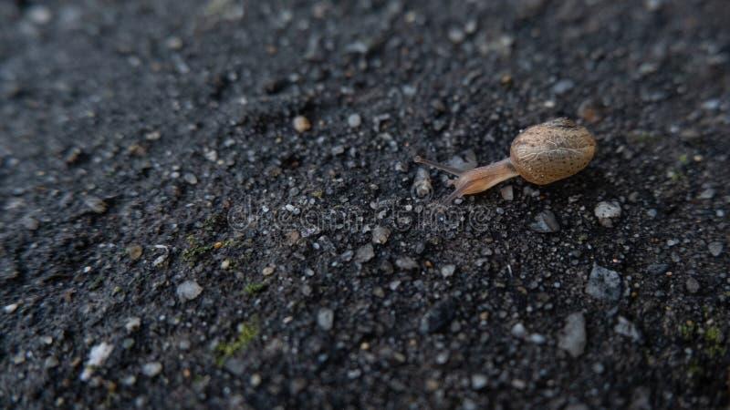 Mały ślimak z góry poruszający się wolno po mokrej czarnej ścianie obraz stock