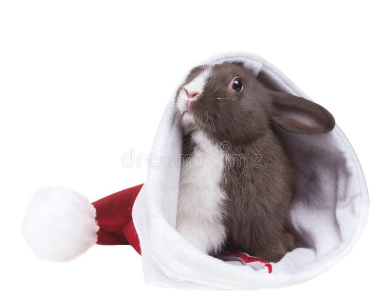Mały śmieszny królik w Bożenarodzeniowym kapeluszu Święty Mikołaj Odizolowywający dalej obrazy royalty free
