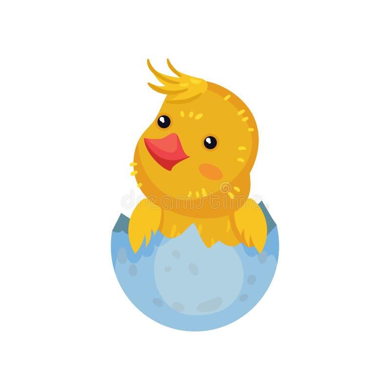 Mały żółty kreskówka kurczak siedzi w skorupie t?a ilustracyjny rekinu wektoru biel ilustracji