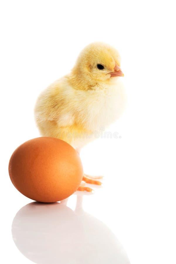 Mały żółty kurczątko z jajkiem. fotografia royalty free