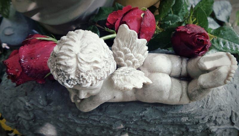 Mały amorek i mali skrzydła w czerwonym ogródzie różanym fotografia royalty free