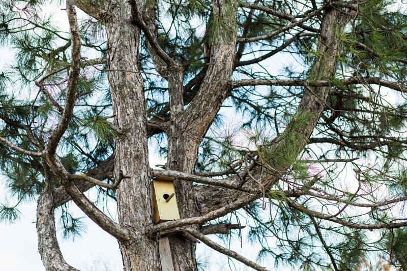 Mały birdhouse w wiośnie na iglastym drzewie obrazy royalty free