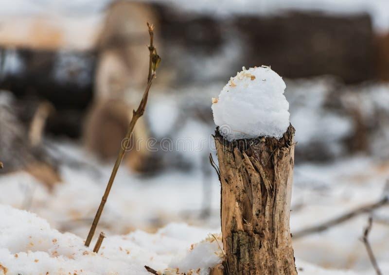Mały brąz i szarość cutten fiszorek drzewo z białym śniegu wewnątrz i koloru żółtego trociny na wierzchołku na zamazanym tle w pa zdjęcie royalty free