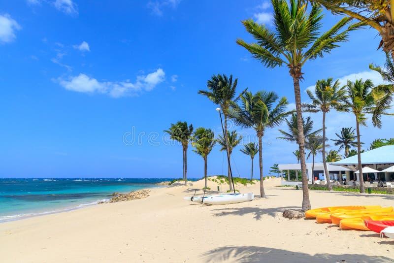 Mały catamaran kłama na plaży pod drzewkami palmowymi w Karaiby republika dominikańska obraz royalty free