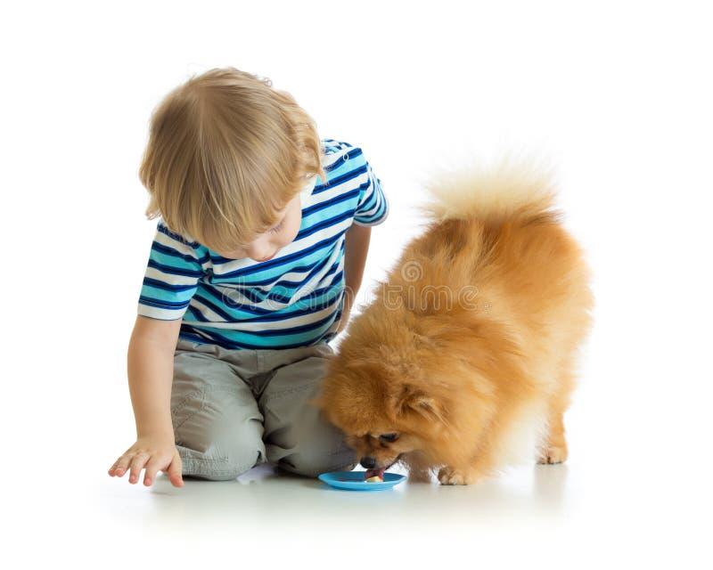 Mały chiild chłopiec karmienia pies odizolowywający na bielu zdjęcia royalty free