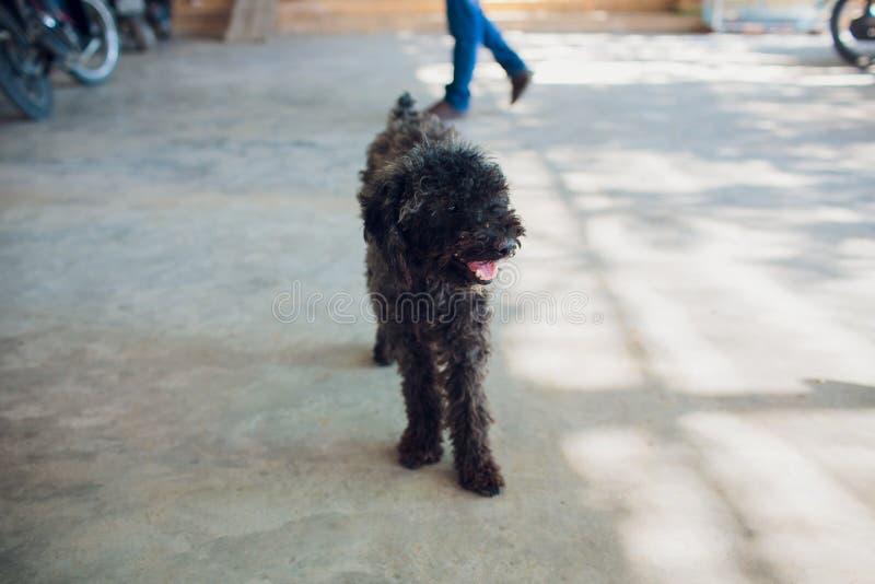 Mały czarny bezdomny szczeniak na ulicie obrazy royalty free