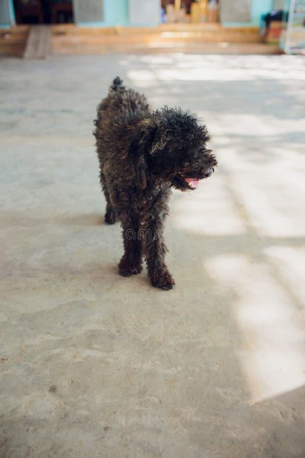 Mały czarny bezdomny szczeniak na ulicie fotografia stock