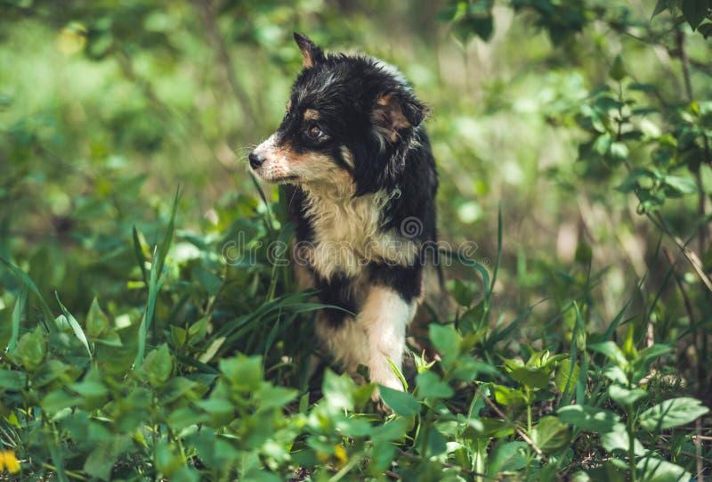 Mały czarny kundla pies zdjęcie stock