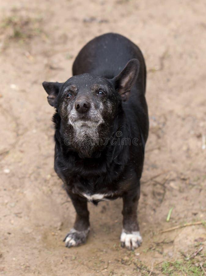 Mały czarny pies fotografia royalty free