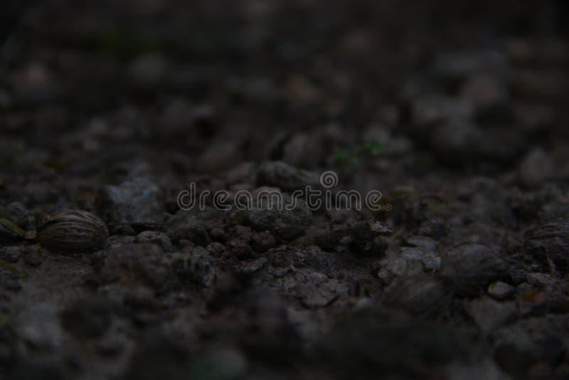 Mały czerń dryluje ile kontuaru i piasek obrazy stock