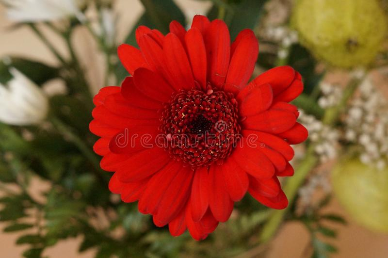 Mały czerwony kwiat w zakończeniu - Frontowy widok obraz royalty free