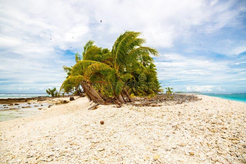 Mały daleki tropikalny wyspy motu przerastający z palmami azures zdjęcie royalty free