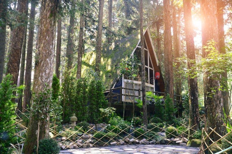 Ma?y drewniany dom lub cha?upa w sosnowym lesie z japo?czyka ogr?du stylem, zmierzchu t?o zdjęcia royalty free