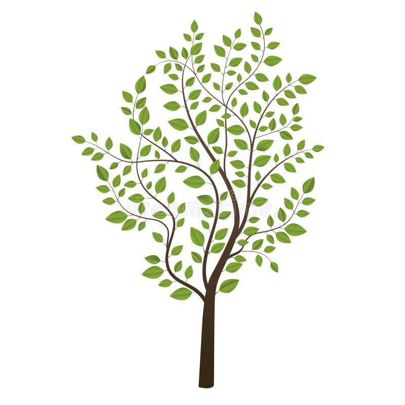 Mały drzewo barwiący na tle zdjęcia stock