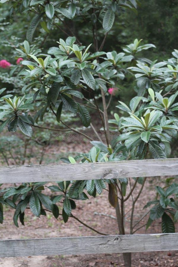 Mały drzewo blisko drewnianej bramy obrazy royalty free