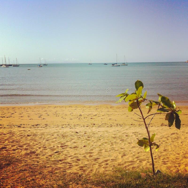 Mały drzewo na plaża przodzie przy Magnesową wyspą, Townsville Australia zdjęcie royalty free