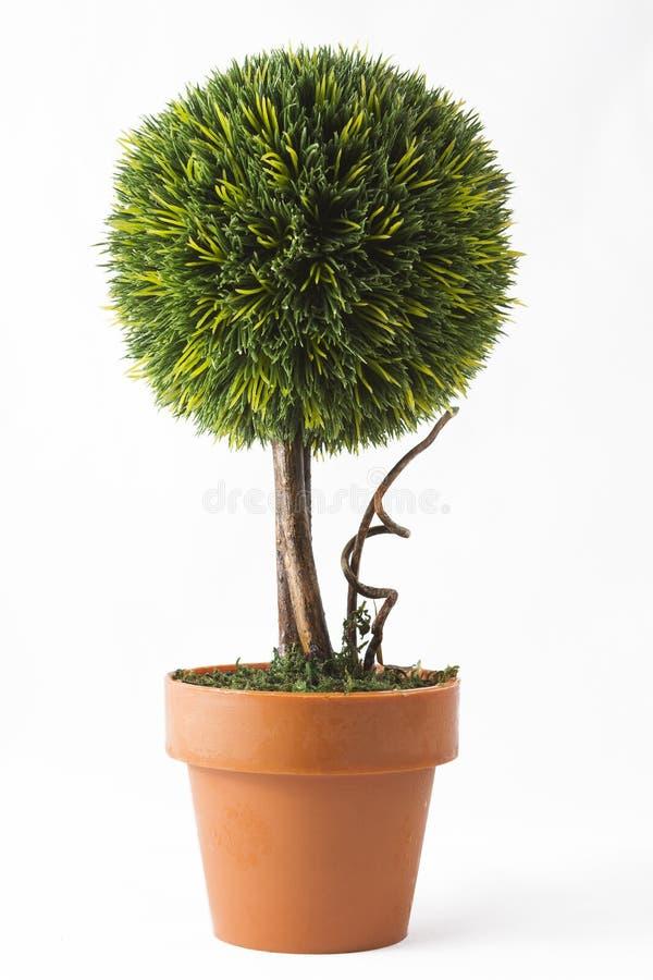 Mały drzewo w garnku obrazy stock