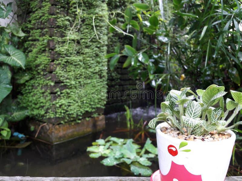 Mały drzewo w ogródzie obrazy royalty free