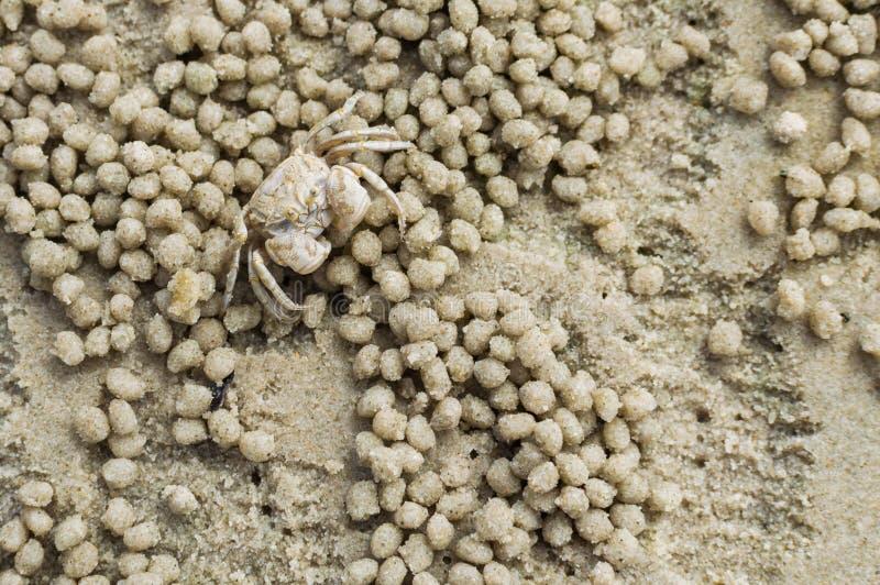Mały ducha krab robi piasek piłce obrazy stock