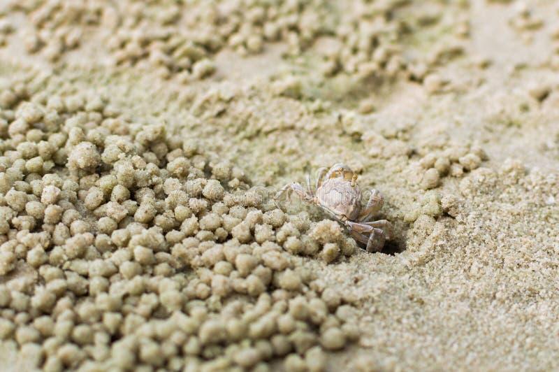 Mały ducha krab robi piasek piłce zdjęcie royalty free