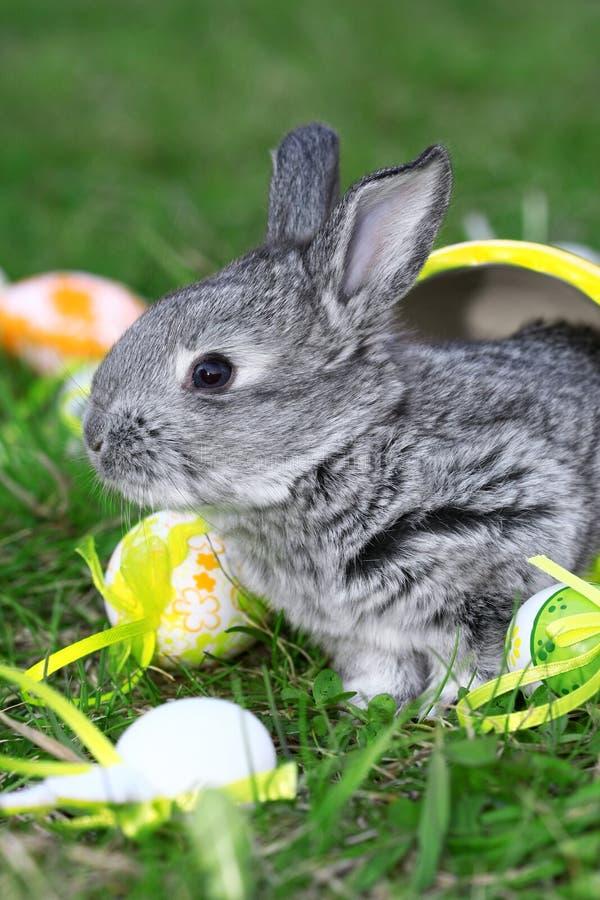 mały Easter królik obrazy stock
