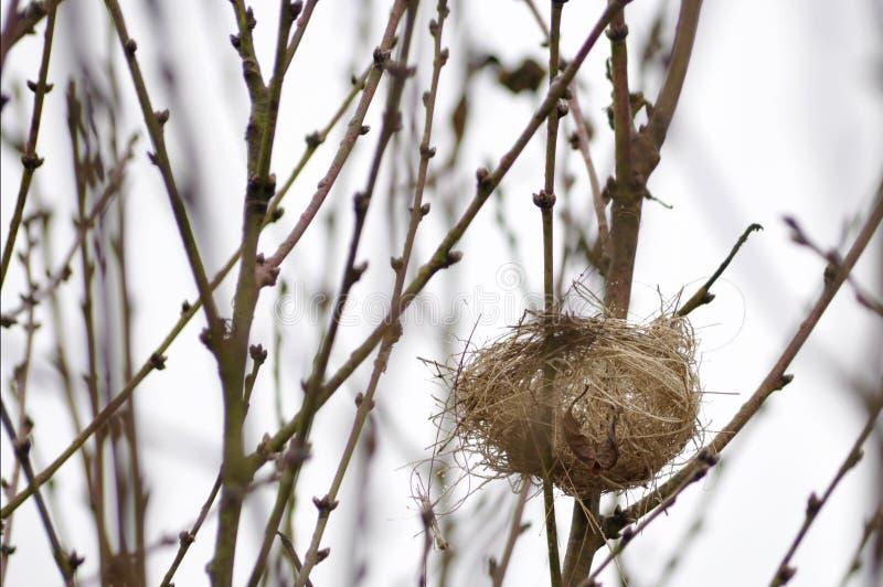 Mały gniazdeczko jesień w drzewie obraz royalty free
