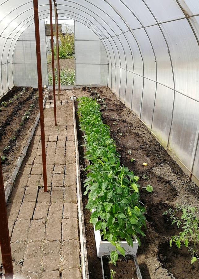 Mały greenhous z uprawianymi roślinami od wśrodku zdjęcia royalty free