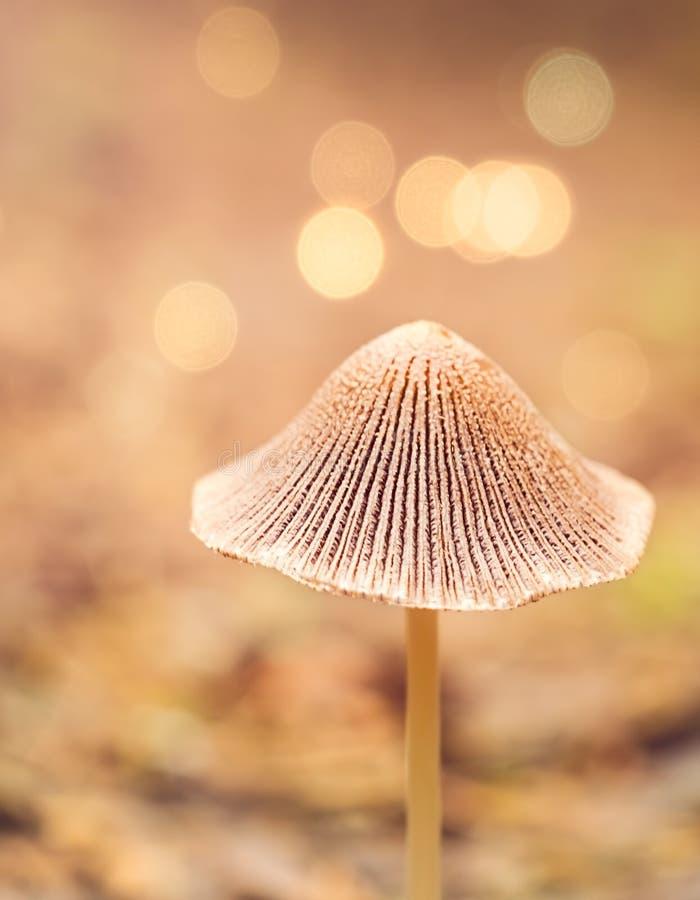Mały grzyb w lesie fotografia stock