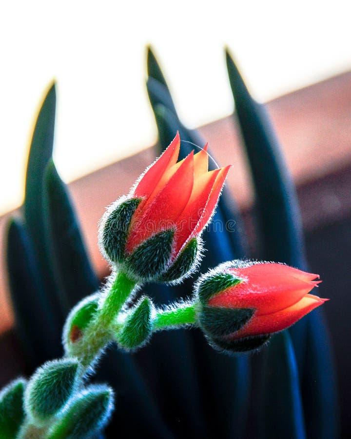 Mały Harry kwiat z Pięknymi płatkami zdjęcia royalty free