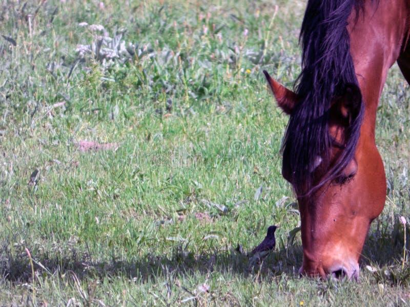 Mały i duży - koń i ptak zdjęcia royalty free