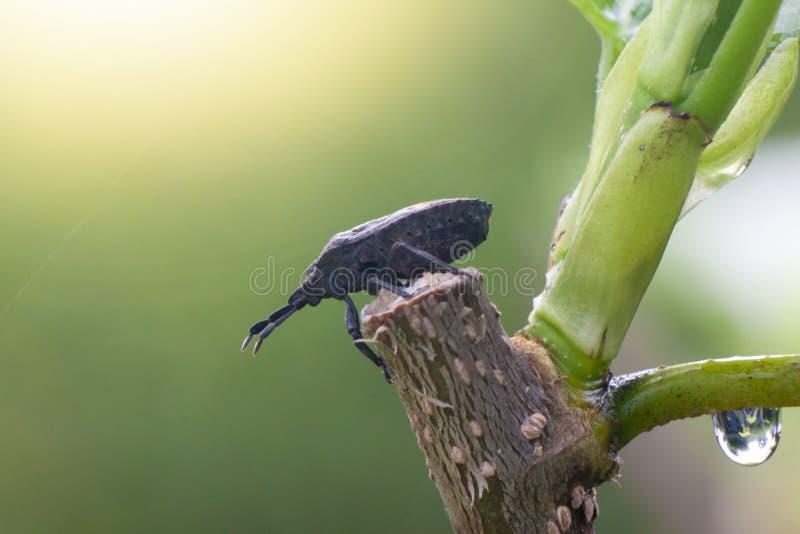 Mały insekt na drzewie zdjęcie stock