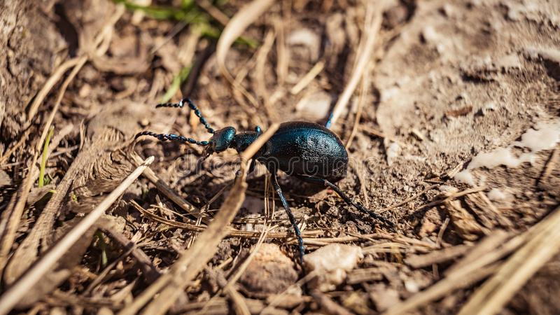 Mały insekt na ziemi zdjęcia royalty free
