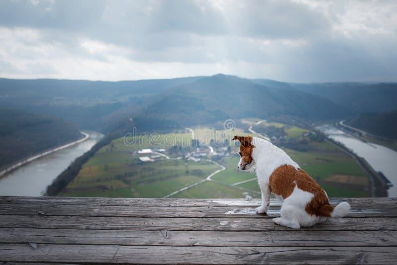 Mały Jack Russell przy falez spojrzeniami przy rzeką Pies z widokiem natury zwierzę domowe na wakacje, wycieczka, zdrowy styl życ obrazy royalty free