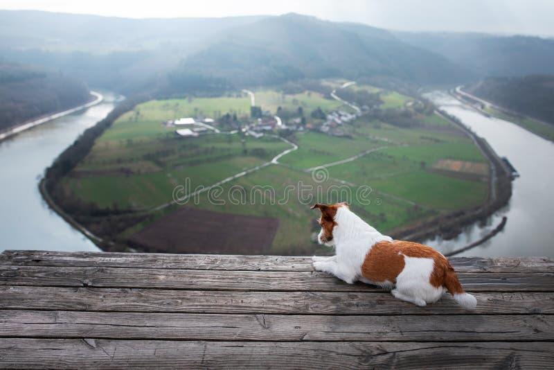 Mały Jack Russell przy falez spojrzeniami przy rzeką Pies z widokiem natury zwierzę domowe na wakacje, wycieczka, zdrowy styl życ zdjęcia royalty free