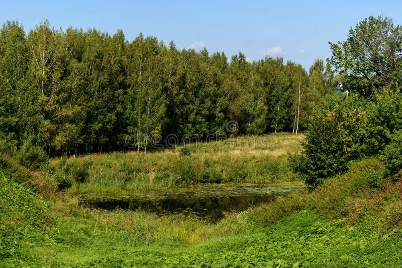 Mały jezioro przerastający z trawą obrazy stock