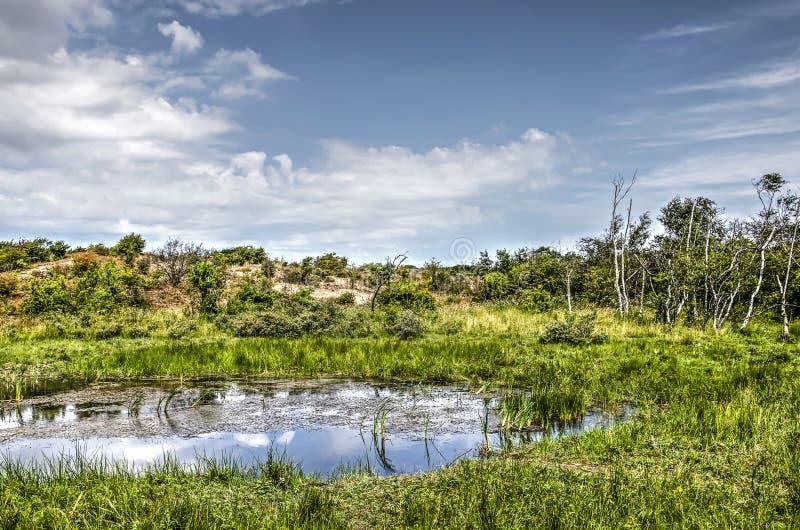 Mały jezioro w diunach fotografia royalty free