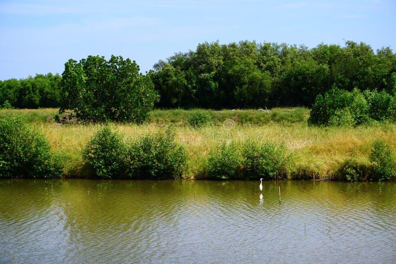 Mały jezioro w starej wioski wsi zdjęcie stock