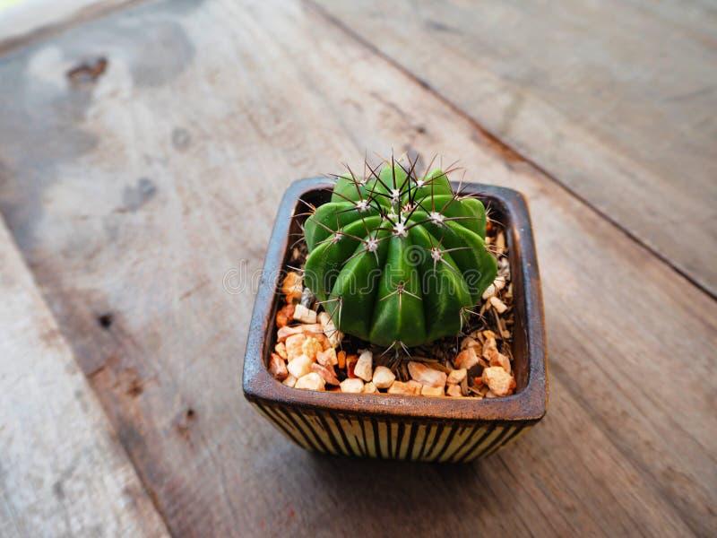 Mały kaktus obrazy royalty free