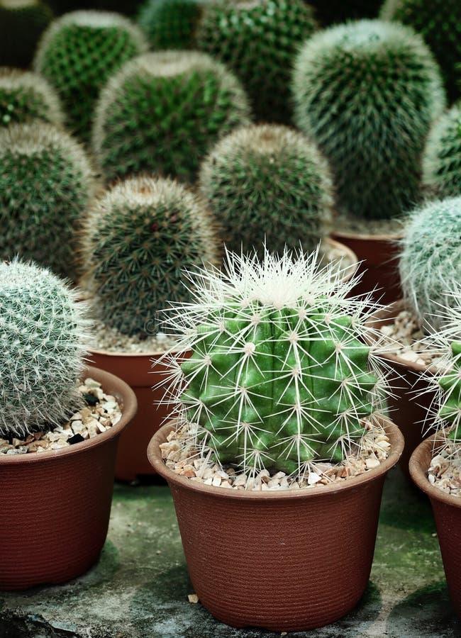 Mały kaktus na garnka naturalnym tle obraz royalty free